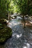 Rapids de fleuve sur les bois Photo libre de droits