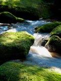 Rapids de Moutain Fotos de Stock Royalty Free
