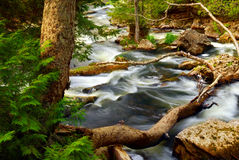 Rapids do rio Foto de Stock