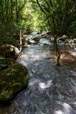 Rapids do rio nas madeiras Foto de Stock Royalty Free