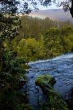 Rapids en montañas tasmanas Foto de archivo libre de regalías