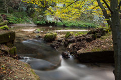 Rapids flowing along forest Stock Image