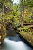 Rapids flowing along lush forest Stock Image