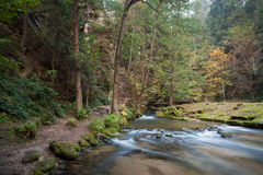 Rapids flowing along lush forest Stock Images
