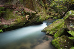 Rapids flowing along lush forest Royalty Free Stock Images
