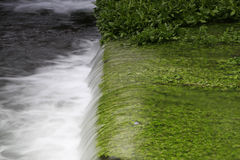 Rapids and green grass Stock Photography