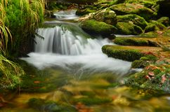 Rapids in moss. Rapids in a small mountain stream nature reserve Stock Photography