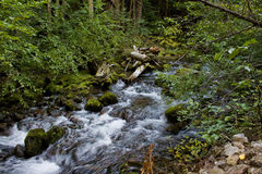 Rapids through mossy rocks. In a lush mixed evergreen forest Royalty Free Stock Images