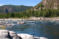 Rapids on the mountain river. Royalty Free Stock Image
