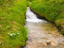 Rapids on mountain stream in spring meadow of Alps. Cold and rainy weather. Stock Photos