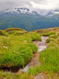 Rapids on mountain stream in spring meadow of Alps. Cold and rainy weather. Stock Image