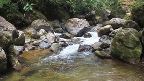 Rapids of Rio Hornito. River in Panama stock video footage