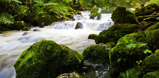 Rapids svizzeri del fiume Fotografie Stock