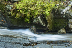 Rapids of Swiftwater Falls with moss and ferns in Franconia Notch. One of the cascades of Swiftwater Falls on Dry Brook, with mosses and ferns along the Falling royalty free stock image