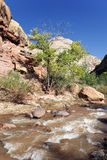 Rapids of the Virgin River Stock Image