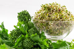 Rapini with rapini sprouts. Fresh rapini with rapini sprouts in dish isolated on white stock image