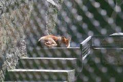 raposa Fotografia de Stock