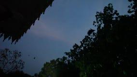 A raposa de voo está vivendo no templo em Tailândia vídeos de arquivo