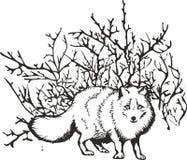 Raposa polar, raposa do norte ilustração stock