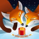 Raposas encontradas no presente do Natal da floresta Fotos de Stock Royalty Free