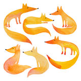 Raposas engraçadas da aquarela no fundo branco Imagem de Stock