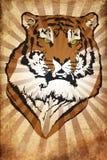 Rappe de tigre de NY Illustration de Vecteur