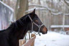 Rappe im Vogelhaus im Winter lizenzfreie stockbilder
