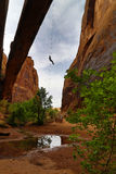 Rappeling of arch in moab royalty free stock photos