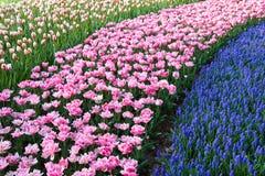 Rappes colorées des fleurs photos stock