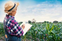 Rapport de merlans de jardinière de dames âgées photographie stock
