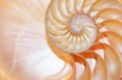Rapporto dorato di crescita della struttura di spirale di sezione trasversale di simmetria di Fibonacci delle coperture di nautil immagini stock libere da diritti