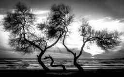 Rappresentazione in bianco e nero della spiaggia Immagini Stock Libere da Diritti