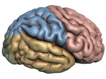 rappresentazione 3d del cervello umano Immagine Stock Libera da Diritti