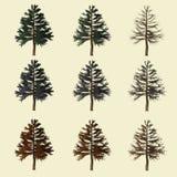Rappresentazione del pino 3d isolata per il progettista del paesaggio Fotografia Stock Libera da Diritti