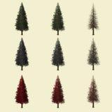 Rappresentazione dell'albero 3d della sequoia isolata per il progettista del paesaggio Immagine Stock