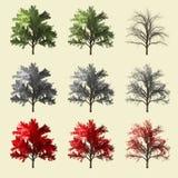 Rappresentazione dell'albero 3d della sequoia isolata per il progettista del paesaggio Fotografie Stock Libere da Diritti