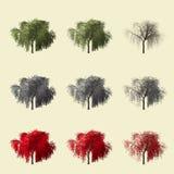 Rappresentazione dell'albero 3d della sequoia isolata per il progettista del paesaggio Fotografia Stock Libera da Diritti