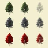 Rappresentazione dell'albero 3d di Aspen isolata per il progettista del paesaggio Fotografie Stock Libere da Diritti
