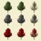 Rappresentazione dell'albero 3d di Ginko isolata per il progettista del paesaggio Fotografia Stock