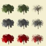 Rappresentazione dell'albero di pepe 3d isolata per il progettista del paesaggio Fotografia Stock Libera da Diritti