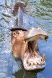 Rappresentazione dell'ippopotamo Immagini Stock