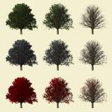 Rappresentazione della quercia 3d isolata per il progettista del paesaggio Immagini Stock Libere da Diritti