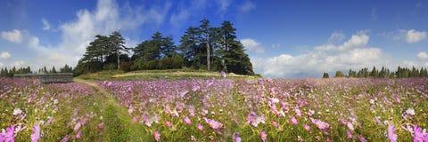 Rappresentazione di bello fiore dell'alta montagna con fondo piacevole v Immagini Stock Libere da Diritti