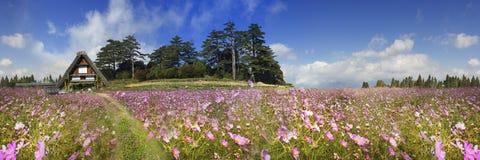 Rappresentazione di bello fiore dell'alta montagna con fondo piacevole v Fotografia Stock