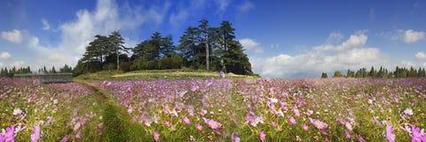 Rappresentazione di bello fiore dell'alta montagna con fondo piacevole v Immagine Stock
