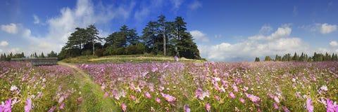 Rappresentazione di bello fiore dell'alta montagna con fondo piacevole v Fotografie Stock