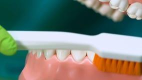 Rappresentazione professionale del dentista come pulire correttamente i denti, igiene della cavità orale video d archivio