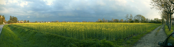 Raps Blossom Field Panorama Royalty Free Stock Image