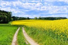 Raps field. Road through flowering yellow canola fields stock photo