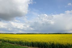 Raps field with blue sky. Raps field with the blue cloudy sky Royalty Free Stock Photo